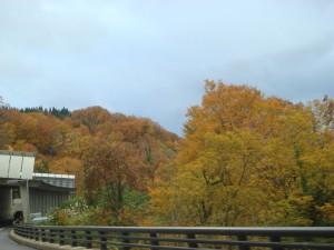間もなく冬を迎える深山の美しい紅葉