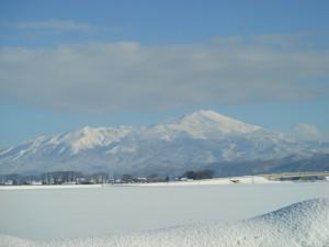 今日は久しぶりの気持ちよい天気でした。鳥海山が輝いていました