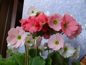 我が家の玄関先にも春の気配です