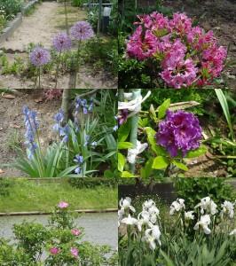 我が家の庭で咲き競う花たち