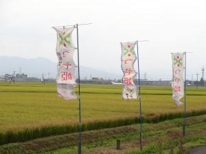 山形県の誇るブランド米「つや姫誕生の地」鶴岡市藤島地域の田んぼ